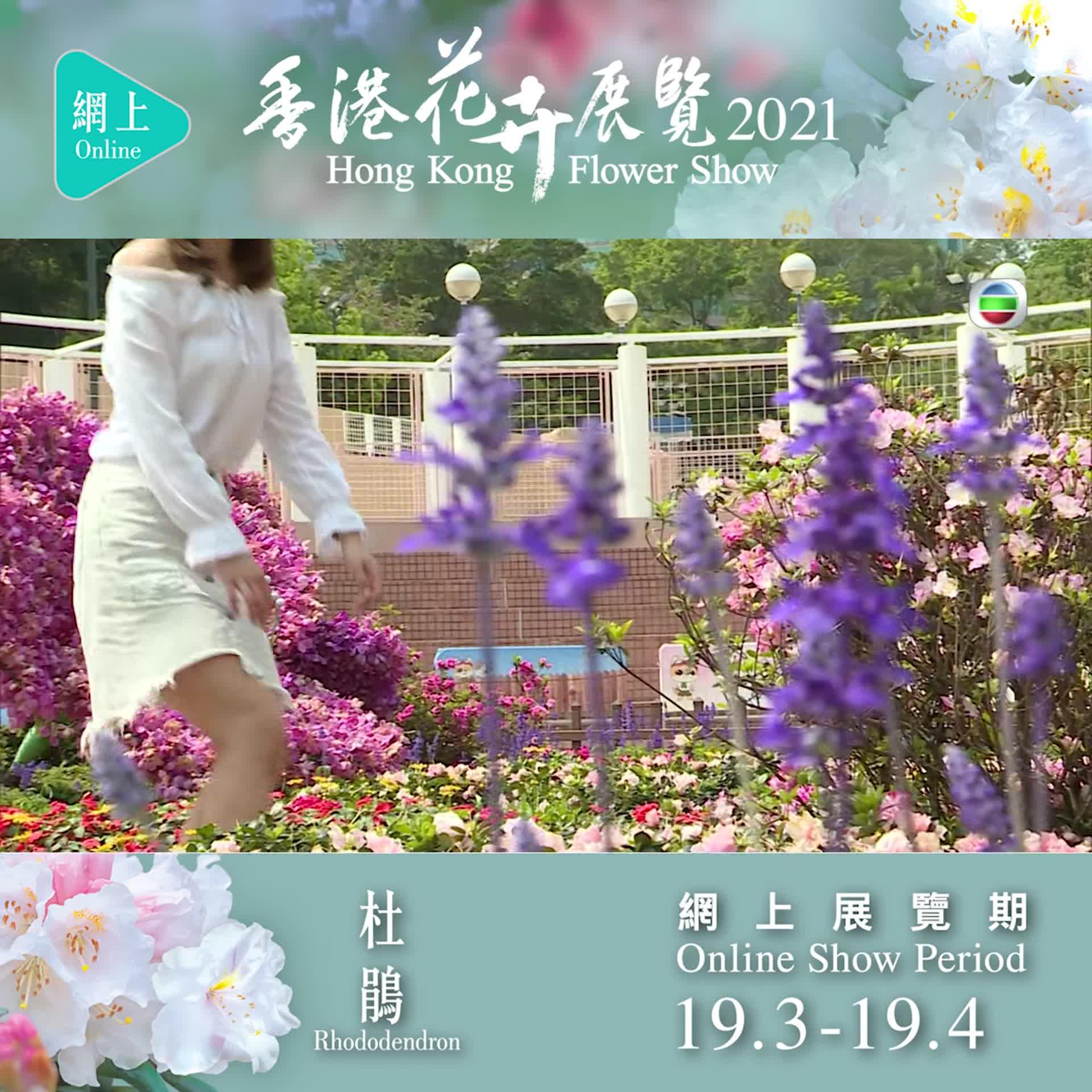 【東張西望】360度賞遍十八區花圃