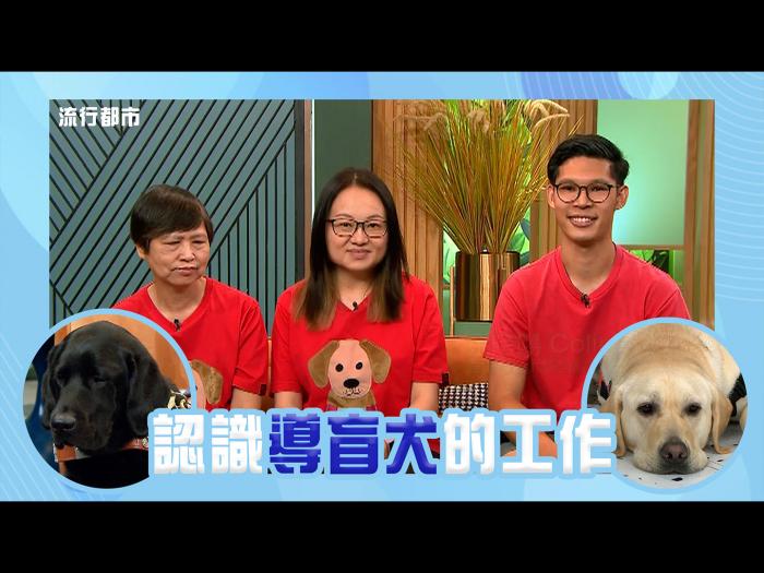 認識導盲犬的工作