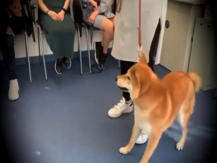 粗暴馴狗遭學員質疑 爭議馴狗師霸氣回應虐狗疑雲