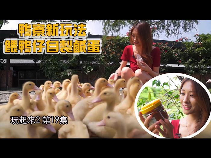 【玩起來2】鴨寮新玩法餵鴨仔自製鹹蛋