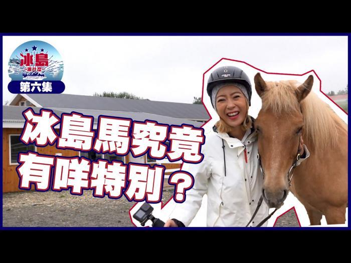 冰島馬究竟有咩特別?
